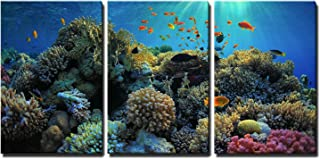 """wall26 - 3 Piece Canvas Wall Art - Beautiful View of Sea Life - Modern Home Decor Stretched and Framed Ready to Hang - 16""""x24""""x3 Panels"""