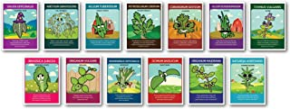 Zziggysgal Culinary Herb Seeds, Non GMO, Easy to Follow Instructions (13 Varieties)