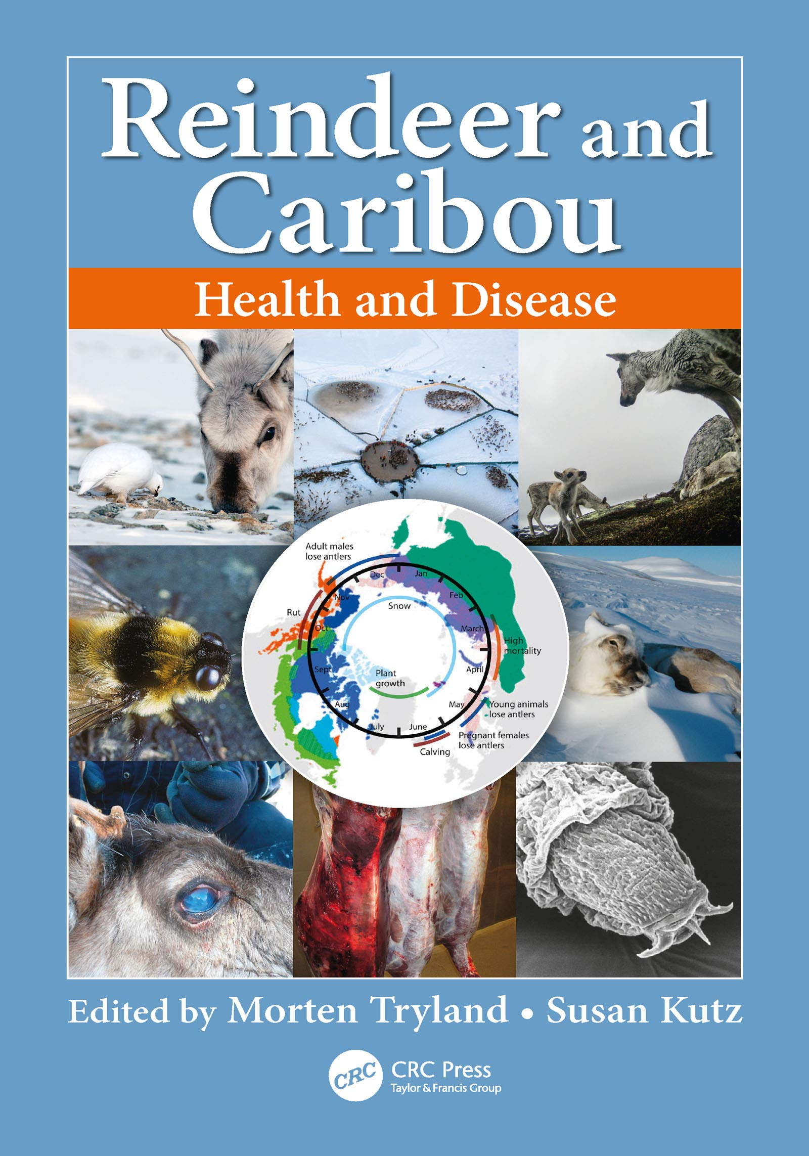 Image OfReindeer And Caribou: Health And Disease (English Edition)