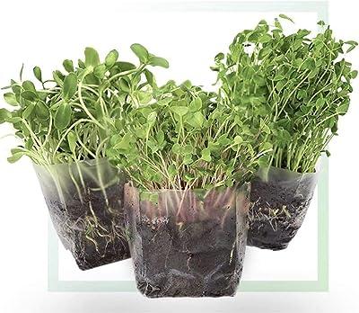 Window Garden Assorted Indoor Microgreens Seed Starter Kit