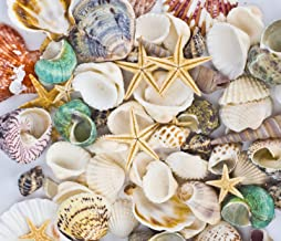 Famoby Sea Shells Mixed Beach Seashells Starfish for Beach Theme Party Wedding Decorations DIY Crafts Candle Making Fish T...