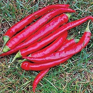 Eine weitere Variante der bekannten Chili-Sorte - Cayenne, groß, rot, dick - 20 Samen