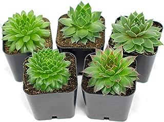 Best succulent live plants Reviews
