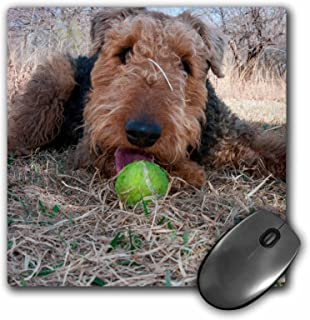 "3dRose Airedale Playing Ball in Dried Grasses, Mouse Pad, 8"" by 8"" (mp_230291_1)"