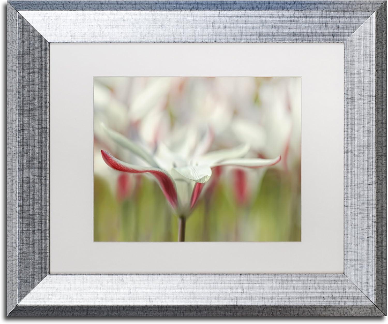 Amazon Com Tulipa Clusiana Cashmeriana By Cora Niele Artwork In White Matte With Silver Frame 16 X 20 Home Kitchen