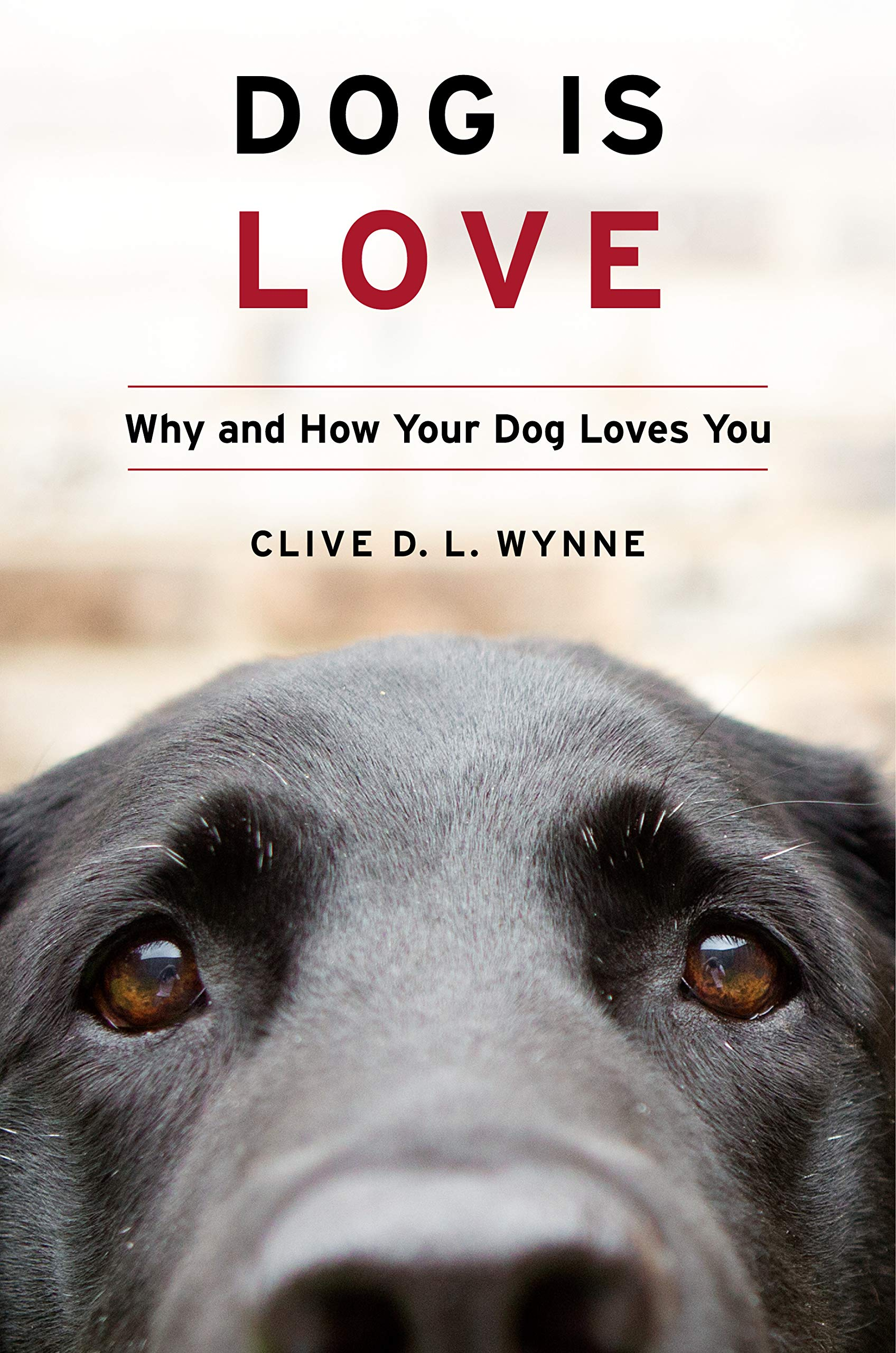 Dog Love Why Your Loves