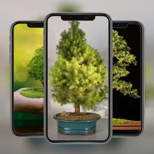 Bonsai Tree Wallpaper HD