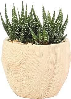 Costa Farms Live Indoor Haworthia Succulent Plant in Wood Design Ceramic Pot