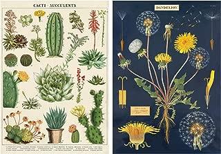 Dandelion and Cacti/Succulent Poster Set of 2 Cavallini 20 x 28 Wrap