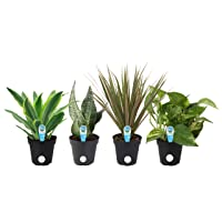 Deals on 4-Pack Costa Farms Clean Air-O2 For You Live House Plant Collection