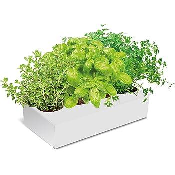 Kit de cultivo de plantas aromáticas para condimentar: Amazon.es ...