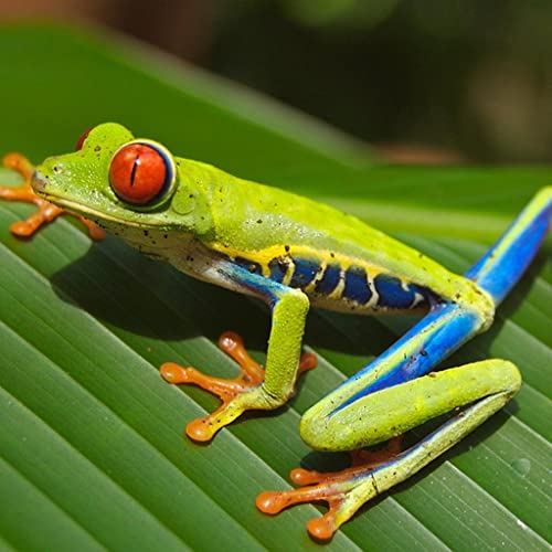 Amphibien Arten Trivia quiz