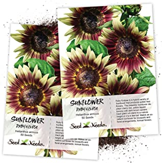 Seed Needs, Ruby Eclipse Sunflower (Helianthus annuus) Twin Pack of 50 Seeds Each