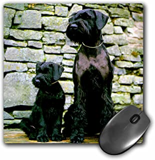 3dRose LLC 8 x 8 x 0.25 Inches Mouse Pad, Giant Schnauzer (mp_480_1)