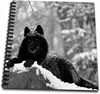 3dRose db_100280_1 Rocky Mountain Wolf, Black White Drawing Book, 8 by 8-Inch