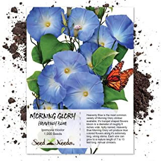 Best blue morning glory Reviews