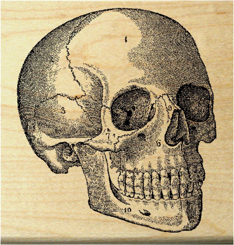 Anatomical Skulls Human Anatomy Medical Illustration Rubber Stamp 068