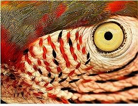 Trademark Fine Art Polly Eye by Dana Brett Munich, 18x24,