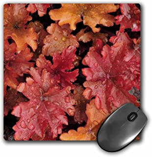 3dRose LLC 8 x 8 x 0.25 Inches Mouse Pad, Oregon, Portland, Peach Flambe Heuchera Flora, Jaynes Gallery (mp_93596_1)