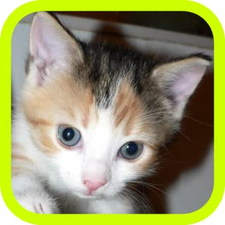 Best free pets wallpapers Reviews