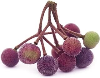 sherbet berry