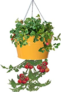 Best hanging cherry tomato baskets Reviews