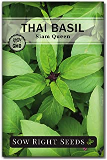 Sow Right Seeds - Sweet Large Leaf Thai Basil Seed for Planting; Non-GMO Heirloom Seeds; Instructions to Plant and Grow a ...