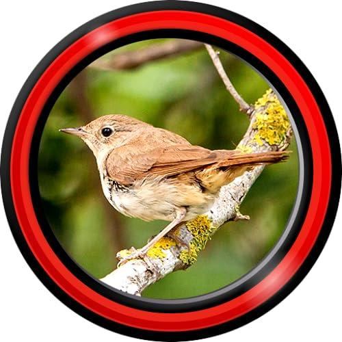 Birds Singing Live Wallpapers