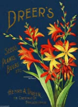 A SLICE IN TIME 1899 Philadelphia Pennsylvania Dreer's Bulbs Vintage Flowers Seed Packet Catalogue Travel Advertisement Poster