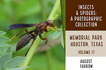 Insects & Arachnids: A Photographic Collection: Memorial Park: Houston Texas - Volume 17 (Arthropods of Memorial Park) (English Edition)