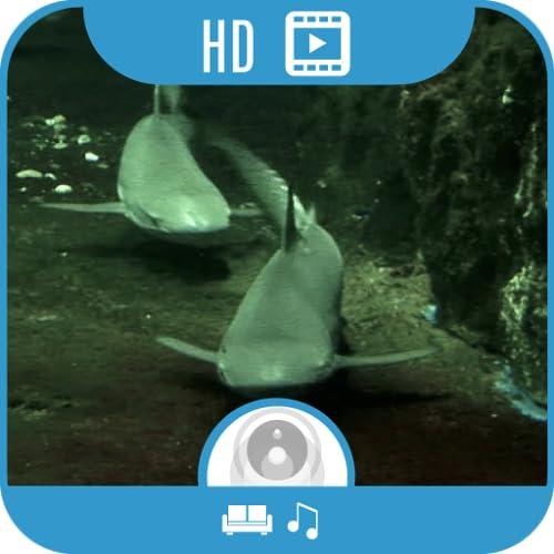 Shark Aquarium HD [5.1 Surround]