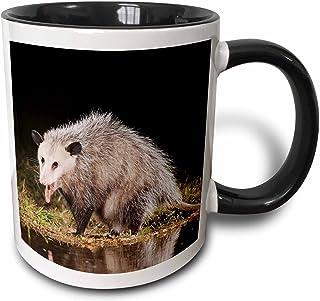 3dRose Virginia Opossum Wildlife, Hill Country, Texas-NA02 RNU0819-Rolf Nussbaumer Two Tone Mug, 11 oz, Black/White
