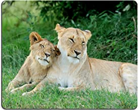 Qzone Mousepads Lion in the National Reserve of Africa Kenya IMAGE 40040562 Customized Art Desktop Laptop Gaming mouse Pad