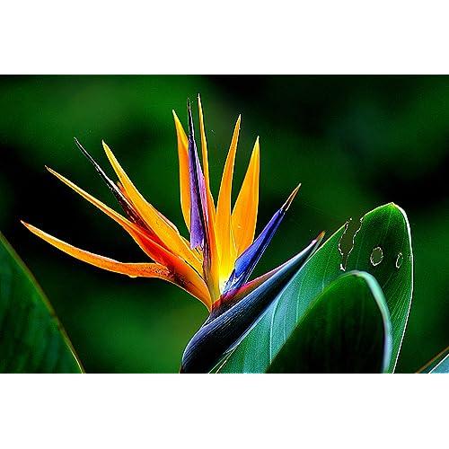 Patio Lawn Garden 4 Pound 9greenbox Live Plants Pack Of 6 Orange Bird Of Paradise Cacti Succulents