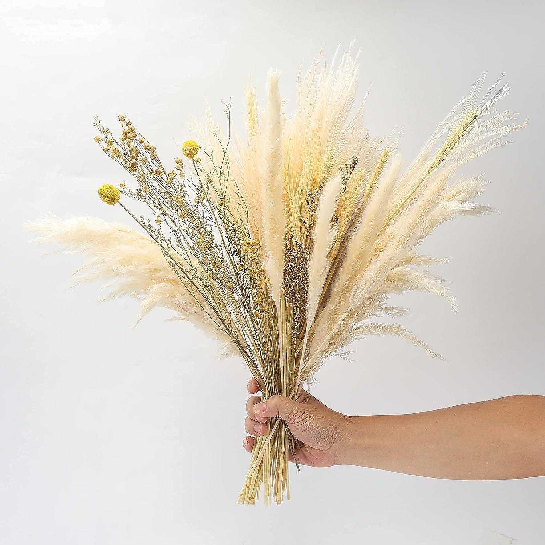 XZYFDHSY Pampas Grass,20 Pcs Dried Pampas Grass Decor Pompas Dried Florals  Tall Pompas Grass ,for Home Decor Wedding Flower Arrangement 20in
