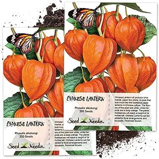 Seed Needs, Chinese Lantern (Physalis Alkekengi) Twin Pack of 200 Seeds Each