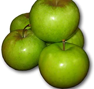 Kauffman Orchards Homegrown Smokehouse Apples, Fresh-picked in Lancaster County, Pennsylvania (Box of 16)