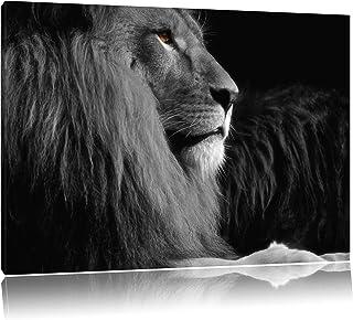 Suchergebnis Auf Amazon De Für Afrika Loewe Wandbild