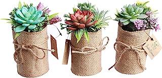 Indoor Flower Pots – Fake Succulent Plants for Bathroom & Office Décor – 3-Piece Set of Herb Garden Artificial Flowers – L...