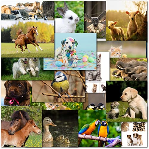 Pack Of 20 Mixed Animal Lovers Birthday Blank Premium Greeting Cards