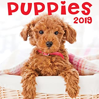 Puppies 2019 Wall Calendar