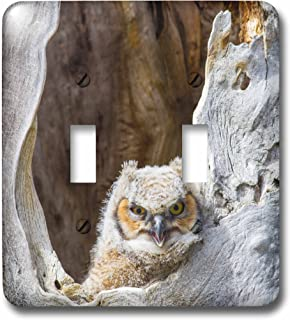 3dRose LSP_231883_2 Wyoming, Horned Owlet Looking Out of Cavity Nest Toggle Switch, Mixed