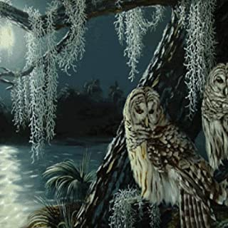 Night of the Owls Live Wallpaper