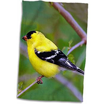 3D Rose Vintage Yellow Finch Bird Illustration Hand//Sports Towel 15 x 22
