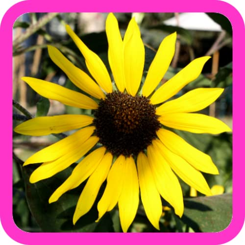 Beautiful Nature Photos!!! Relax with Amazing Natural Pictures of National Parks, Waterfalls, Flowers, Garden Pics, Sunset & Sunrise Landscape, and Plants! Fun Free Wallpaper Design App for Kids & Adults!