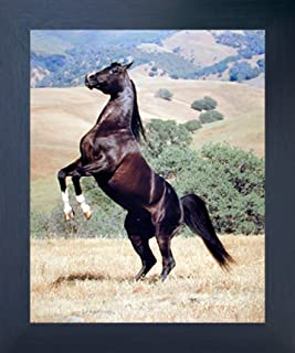 Impact Posters Gallery Framed Wall Decor Wild Black Horse Rearing Espresso Picture Art Print (20x24)