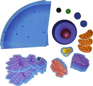 Best animal cell structure 3d model Reviews