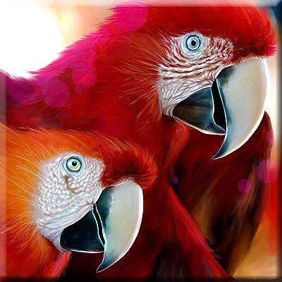 ct/_208240/_2 Santa Barbara - Ceramic Tile Profile of Macaw at Santa Barbara Zoo 6-Inch California 3dRose USA