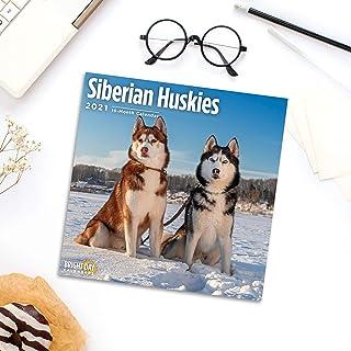 Bright Day Calendars 2021 Siberian Huskies Wall Calendar by Bright Day, 12 x 12 Inch, Cute Dog Puppy