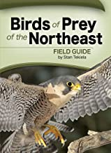Birds of Prey of the Northeast Field Guide (Bird Identification Guides)
